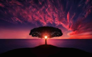 stages after diagnosis resolution - a tall tree stretches out across a beautiful purple skyline sunset